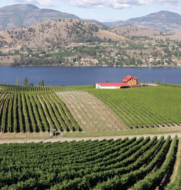 Blasted Church Winery & Vineyard in Okanagan Falls is one of a number of wineries in south-central British Columbia.