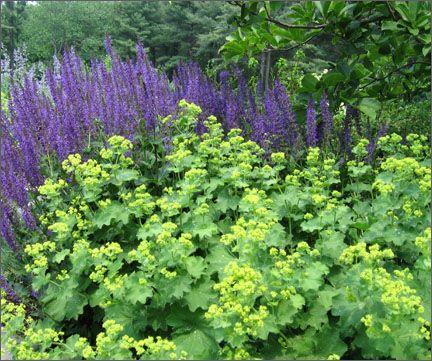 Parterre Garden Services: Our Work: Gardens