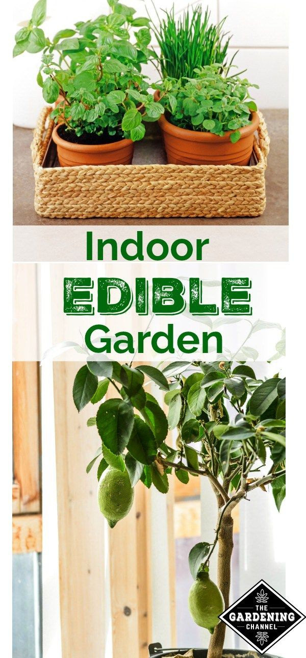 Indoor edible gardening.  Try planting some of these plants indoors this winter to keep your garden alive all year long.