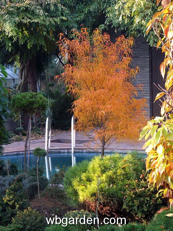 17 best images about garden on pinterest shade garden garden ideas and landscaping for Pine garden exeter nh