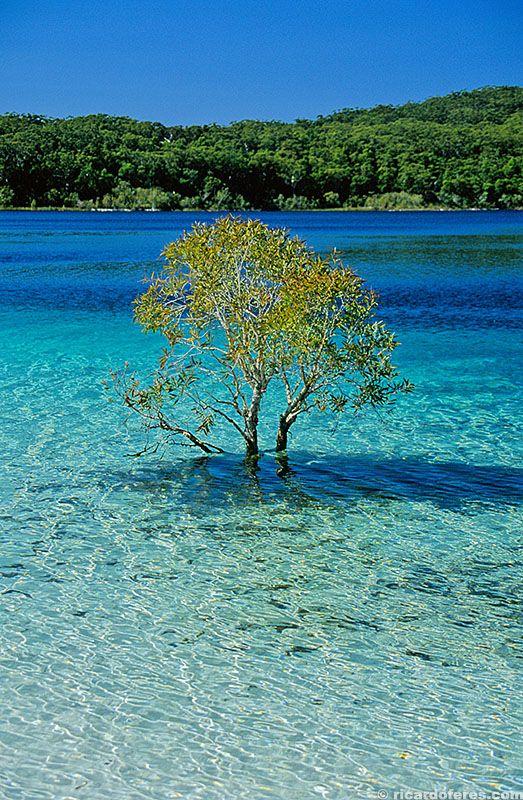 Lake McKenzie, Fraser Island, Australia. More images at http://ricardoferes.com