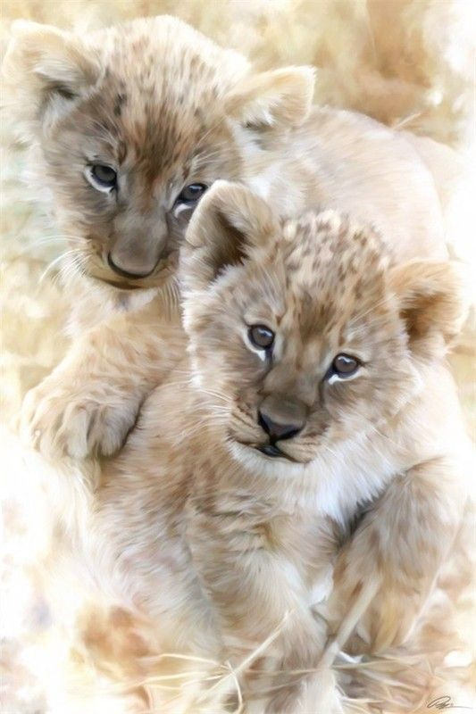 belles images animaux sauvages - Page 9