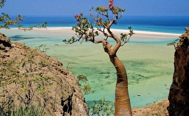 Архипелаг Сокотра находится в Индийском океане, в 350 км. к югу от Аравийского полуострова. Он состоит из 4х островов, три из которых — Сокотра, Абд-эль-Кури и Самха — обитаемы, и двух скал. Архипелаг входит в состав Республики Йемен.
