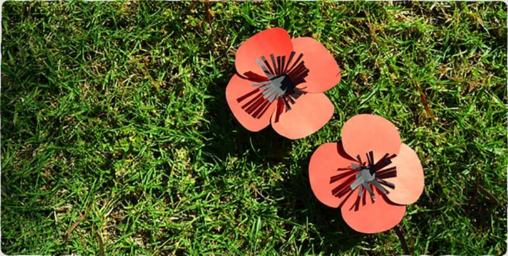 Remembrance Day is a very important day on the Australian calendar. This easy paper poppy craft is a good way to mark and learn about this important historical occasion.