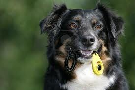 #adiestramiento #canino #entrenamiento #perro #clicker