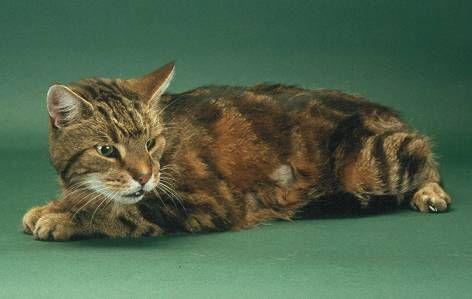 Hyperthyroidism | international cat care