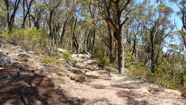 Bush walking track in the Blue Mountains, at Mount Blackheath lookout