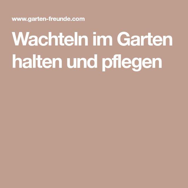 Enten Schnecken Fressen Garten: Die Besten 25+ Wachteln Halten Ideen Auf Pinterest