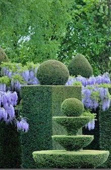Topiary and wisteria                                                                                                                                                                                 More