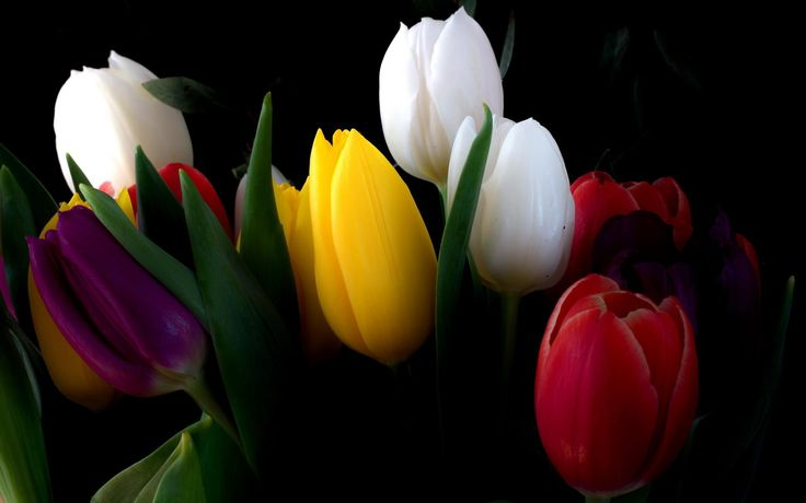 nice different tulips wallpaper Check more at http://www.finewallpapers.eu/pin/19262/