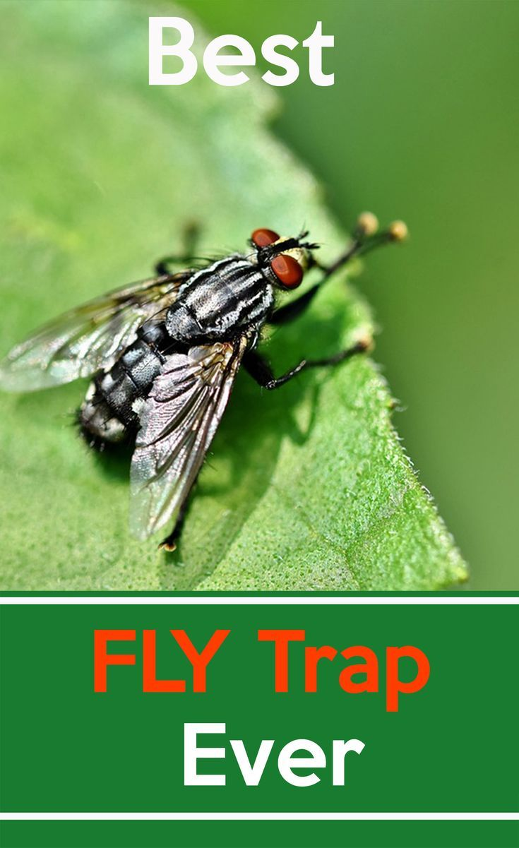 Best Outdoor Fly Pest Control Traps 7savings Com Fly Traps Pest Control Traps Best Fly Trap