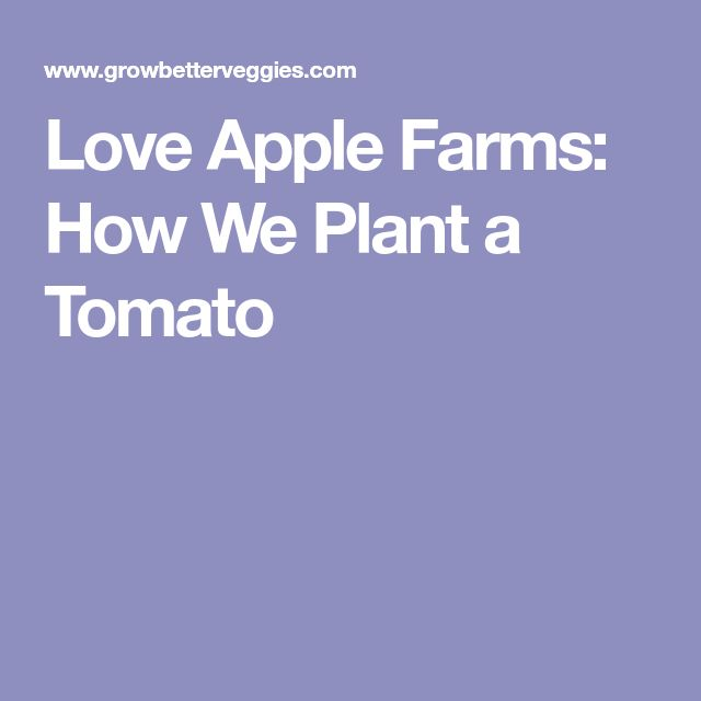 Love Apple Farms: How We Plant a Tomato