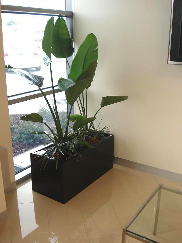 Best 25+ Fiberglass planters ideas only on Pinterest   Urn ...