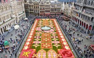 Flower carpet in Brussels, Belgium!Squares, Flower Carpets, Landscapes Architects, Art, Belgium, Fresh Flower, Places, Brussels, Annual Flower