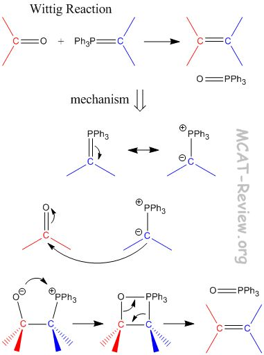 Wittig+Reaction+Mechanism | carbonyl phosphorus ylide alkene the c 1 o ph 3