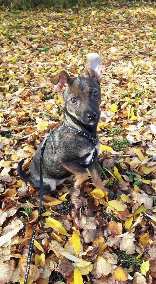 Hunde Foto: Silvia und Stella - Meine Süße Hier Dein Bild hochladen: http://ichliebehunde.com/hund-des-tages  #hund #hunde #hundebild #hundebilder #dog #dogs #dogfun  #dogpic #dogpictures