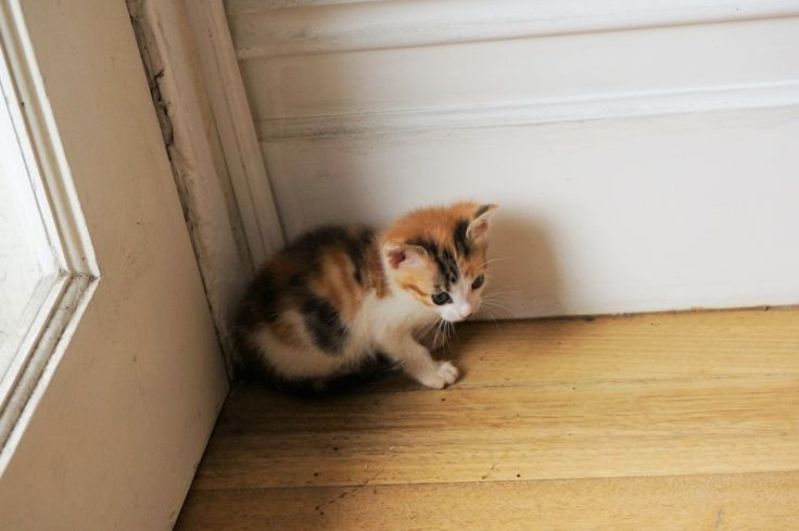 Sydney Cat Cafe – Kitten POP UP