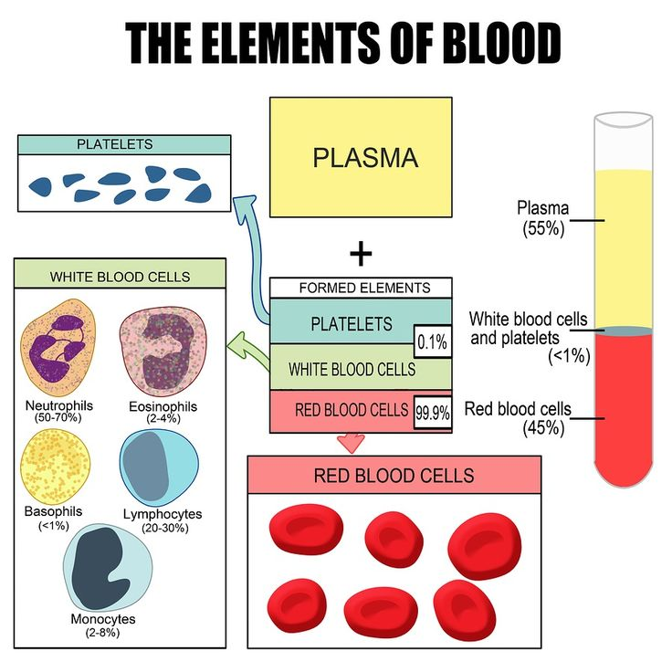 47 best Immune System images on Pinterest Immune system, Natural - new coloring pages blood blood consists of plasma and formed elements
