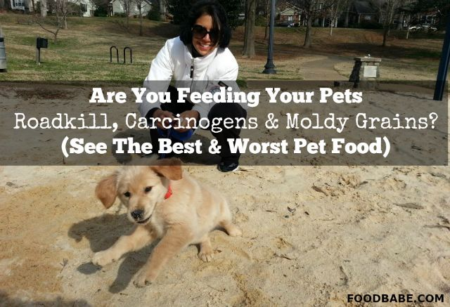 Are You Feeding Your Pets Roadkill, Carcinogens & Moldy ...