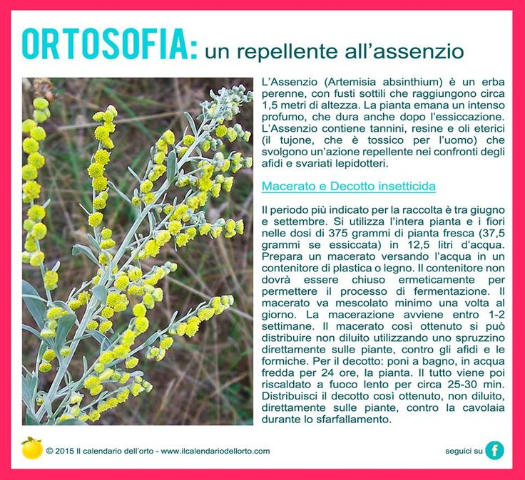Un repellente all'assenzio