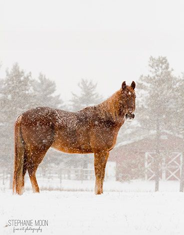 Horse in the Snow Photography Horse Photo Horse by stephaniemoon, $30.00