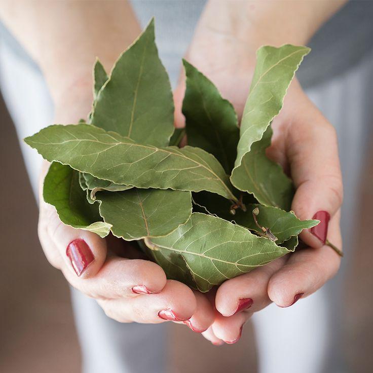 Veja como a energia das plantas podem limpar a alma com um auto benzimento.