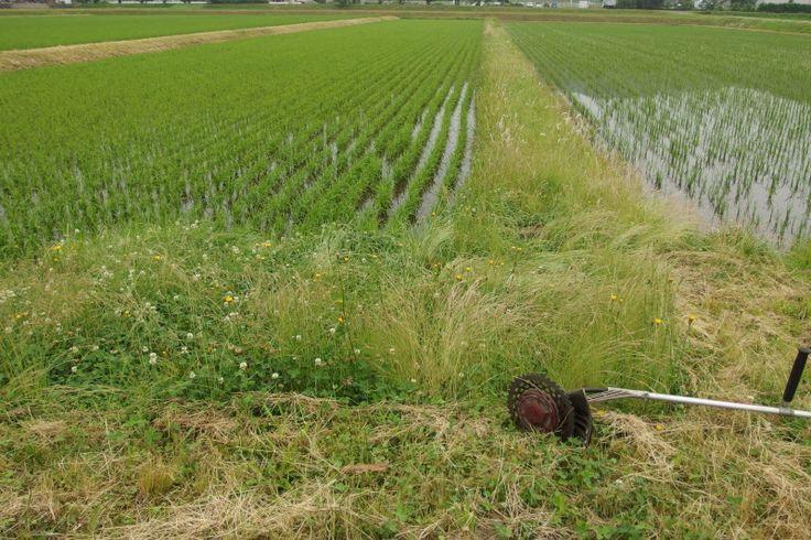 新工具と持ち手の画像 - レザークラフト&農作業日誌 _ ToruMade - Yahoo!ブログ