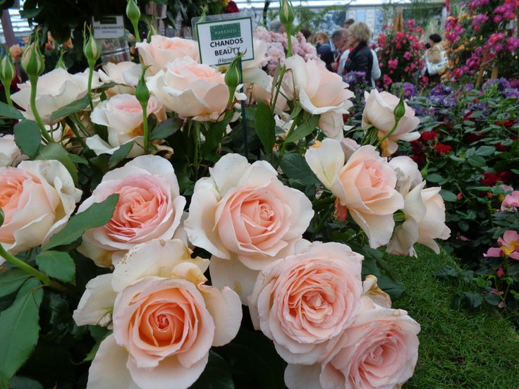 These roses smelt as good as they looked