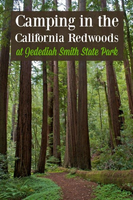 Camping in the majestic California redwoods at Jedediah Smith State Park