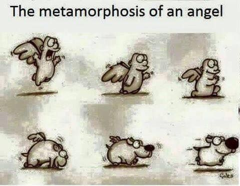 the true metamorphosis Metamorphosis means transforming, or change in nature in biology, metamorphosis is the process by which an animal develops continually, after birth or hatching.