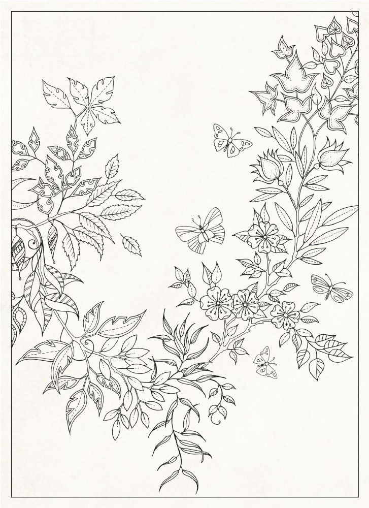 Secret Garden 20 Postcards Johanna Basford 9781856699464 Amazon Books Colouring