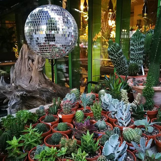 Summer, sun and fun ☀   Have a lovely weekend everyone :) #letsdance #berlin #suculent #plant #plants #shop #disco #discoball #discokugel #shine