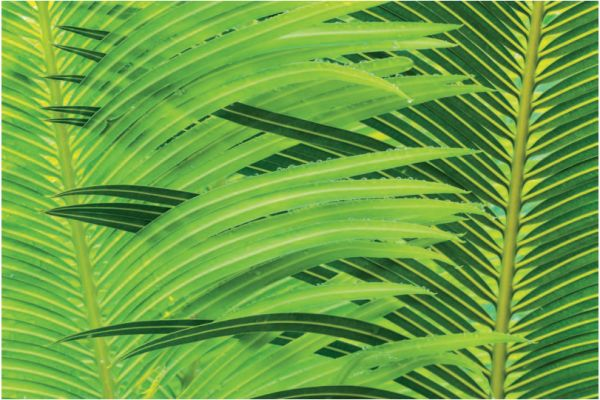 Перемежающиеся оттенки зеленого и капли воды создают уравновешенную и законченную композицию