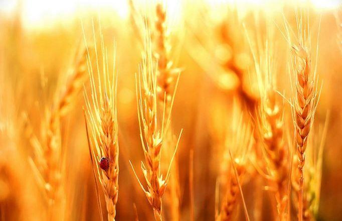 ਆਈ ਆਈ ਵੈਸਾਖੀ....ਫਸਲਾਂ ਦੀ ਹੁੰਨ ਮੁੱਕ ਗਈ ਰਾਖੀ Wishing prosperity and happiness to our farmers! #HappyBaisakhi to all.