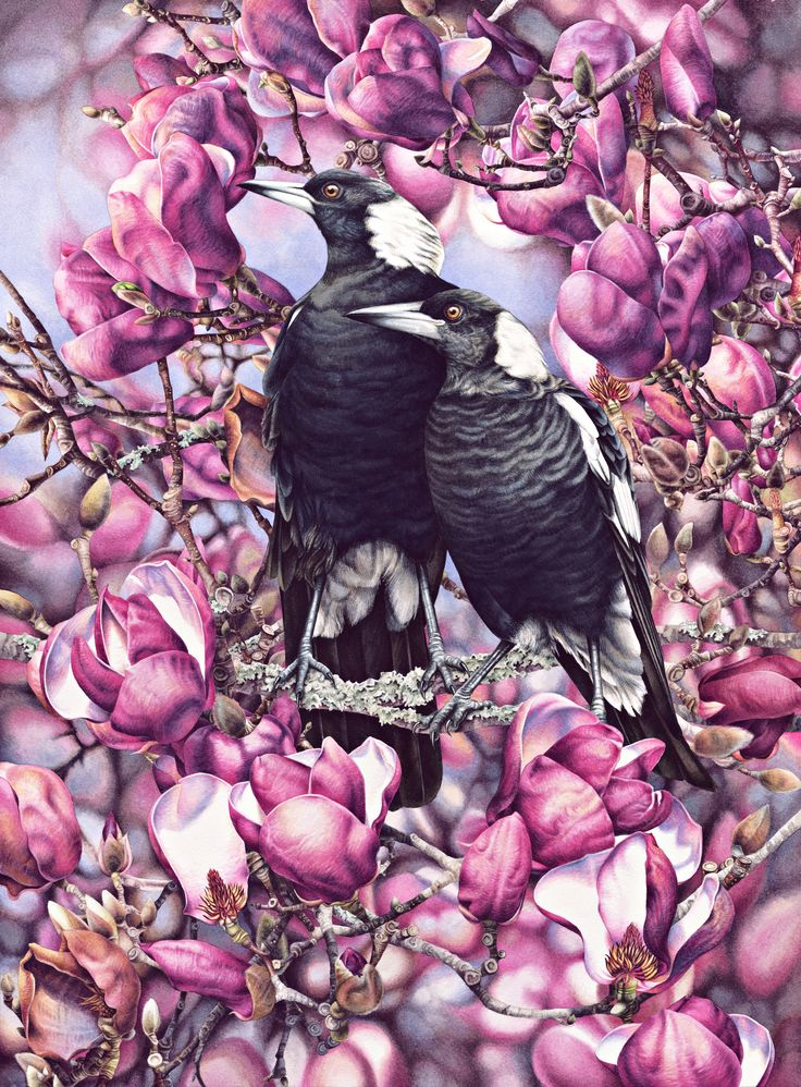 Heidi Willis - Magpies and Magnolias