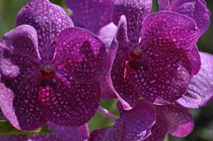 Orchids at Orchid World