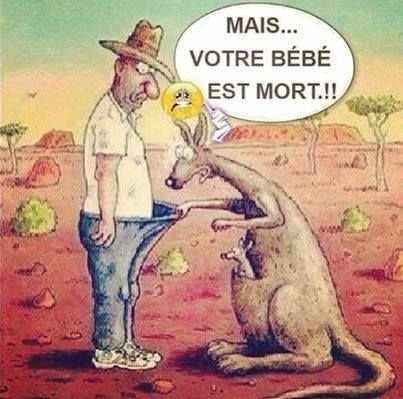 Bébé kangourou!!