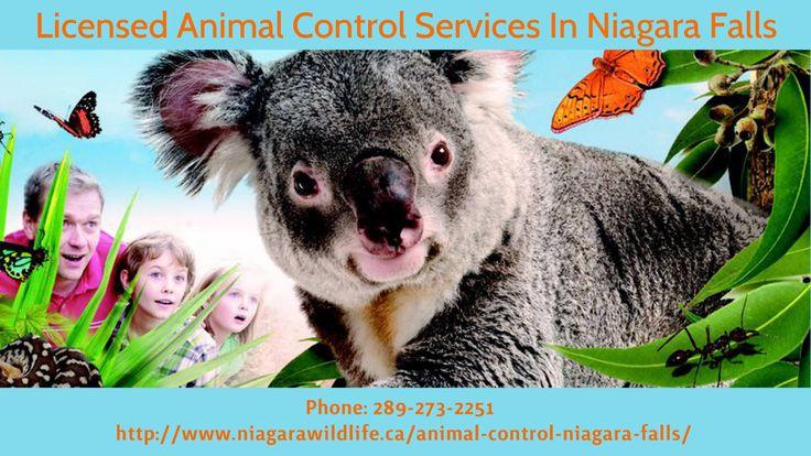 Effective Animal Control Services In  Niagara Falls