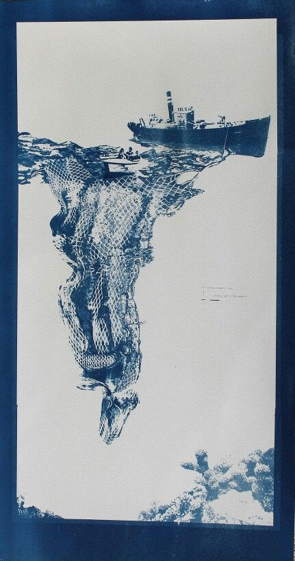 """""""Out of Water (NERINE)"""", 2015 -cyanotype on fabriano"""
