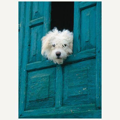 Dog #postcards