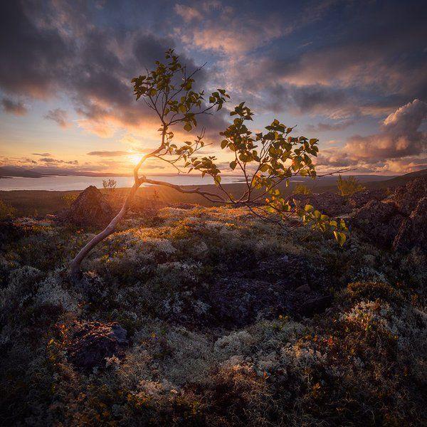 За полярным кругом, на границе леса и тундры.  Хибины, Кольский полуостров, Россия. Фото: EGRA