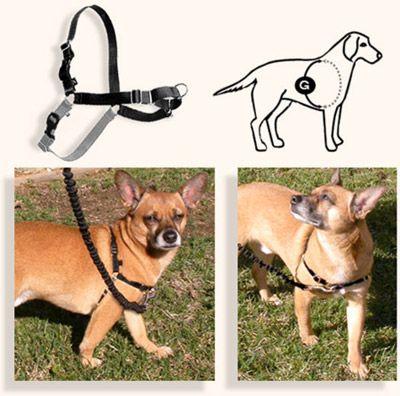 Arnés sense-ible de control para perros -Tienda Canina