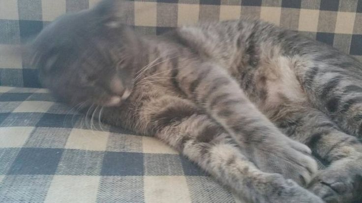 North Stonington Animal Control Page Liked · 23 hrs  · grey tabby  This guy went missing from 201 near Stonington and North Stonington Town lines. Has a seresto collar on. He is microchipped. Please contact North Stonington Animal Control at 860 287-2197 with any sightings