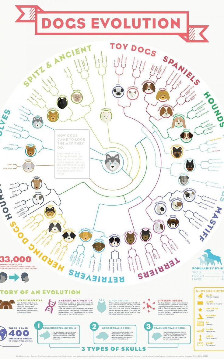 Évolutions des chiens