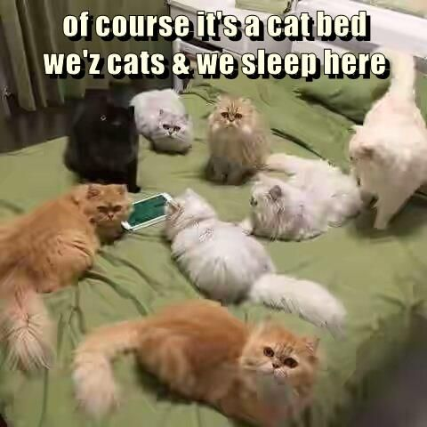 of course it's a cat bed                                                             we'z cats & we sleep here