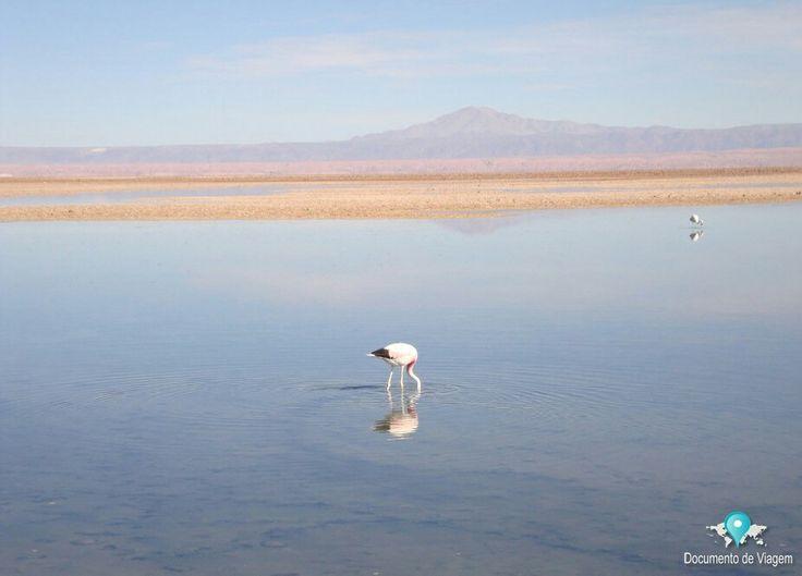 🇧🇷 O Salar de Atacama é um deserto de sal no Chile. Algumas áreas da salina fazem parte da reserva ecológica Los Flamencos.  🇺🇸 Salar de Atacama is the largest salt flat in Chile. Some areas of the salt flat form part of Los Flamencos National Reserve.