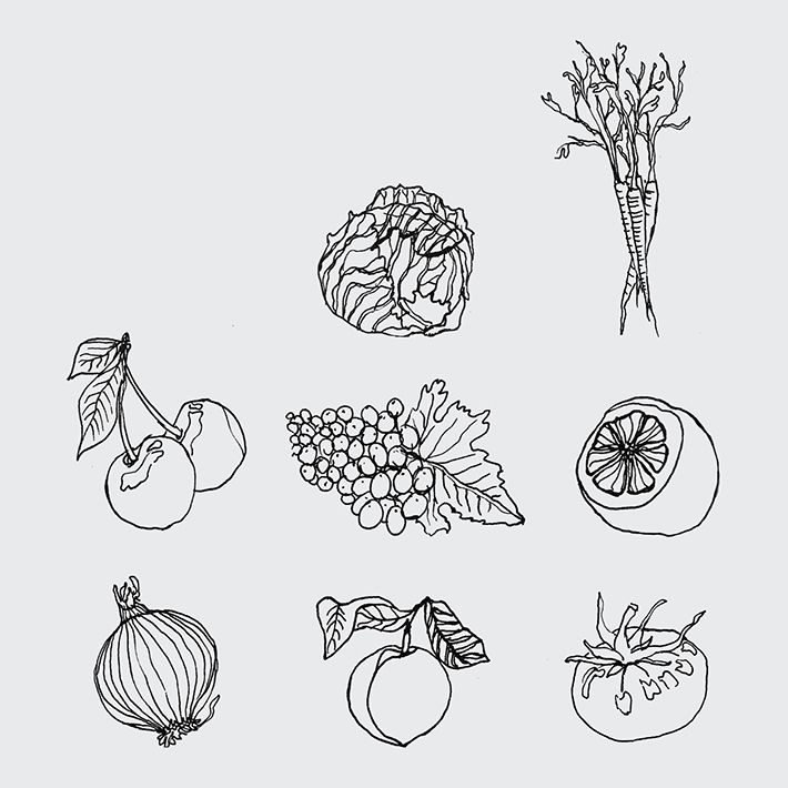 Illustrated data visualization – Wip – Catalogue