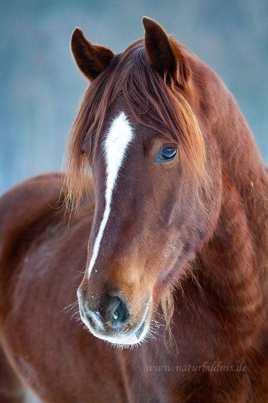 Fotos » Pferde » naturbildnis.de