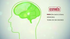 neuroeducacion - YouTube