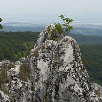 A Bükki Nemzeti Park Magyarország legnagyobb hegyvidéki, erdős nemzeti parkja.